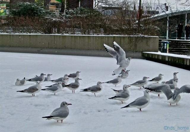 Campusteich im Winter 2013