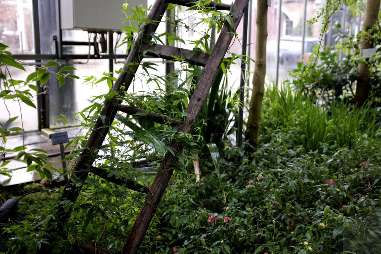 Gewächshausgrün in Planten un Blomen am Jahresanfang 2018, aufgenommen mit X100f von Fuji